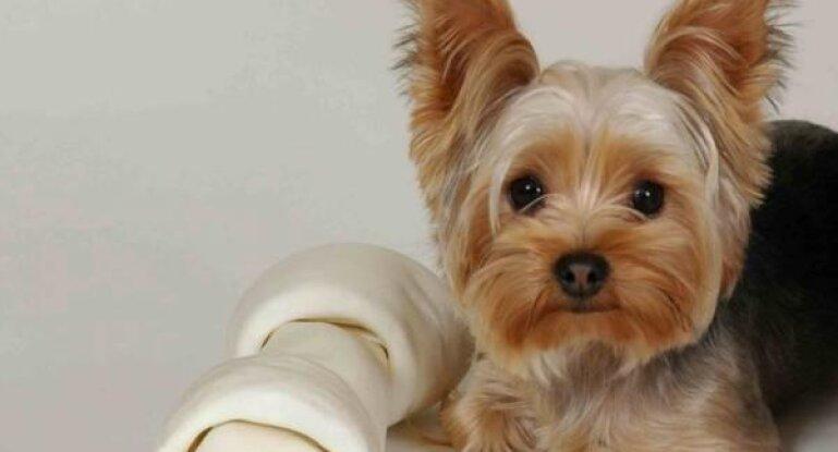 одежда для йорков шьем и вяжем костюмчики для собак своими руками
