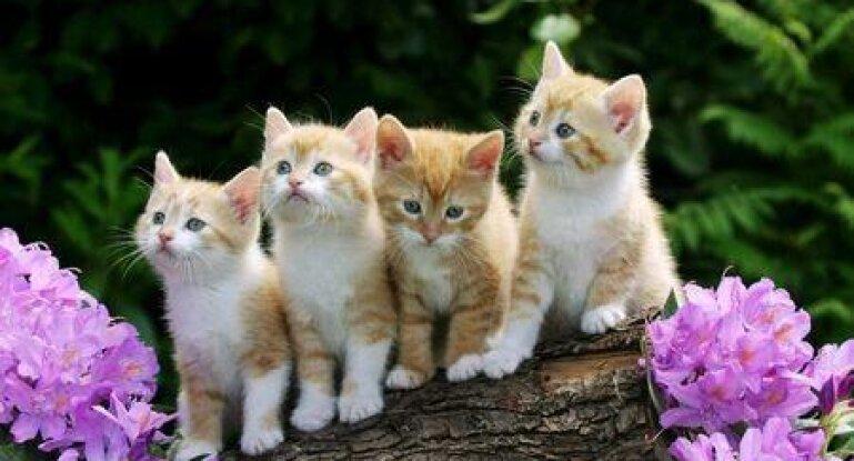 коронавирус у кошек особенности его лечение фото и