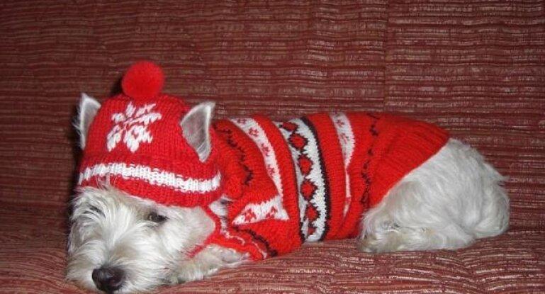 подробная инструкция по вязанию теплого свитера для собаки своими руками