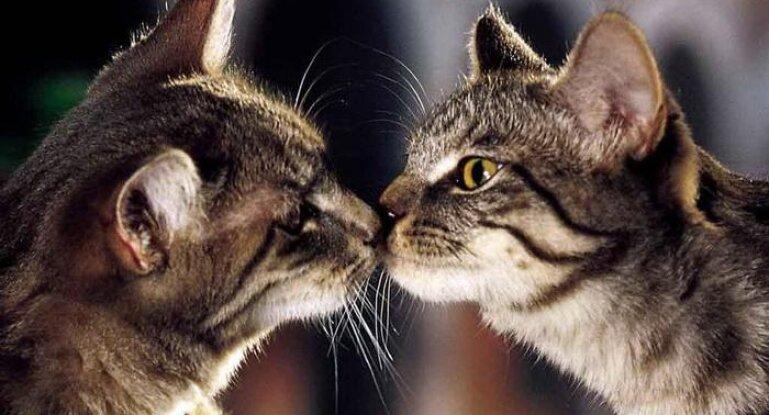 Контрасекс для кошек кормит котят