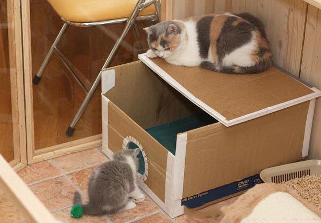 Две кошки и дом из картона