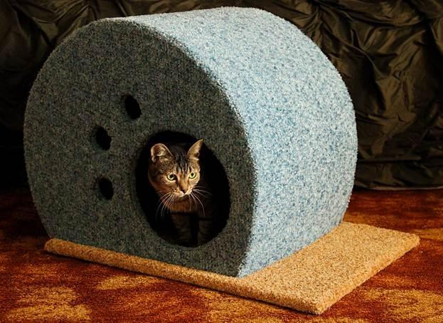 Кот в голубом домике
