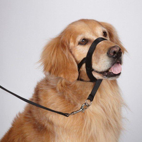 Рыжая собака в халти