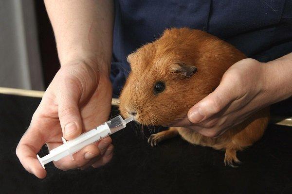 признаки заболевания свинкой: