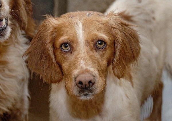 Что делать если у собаки лишай