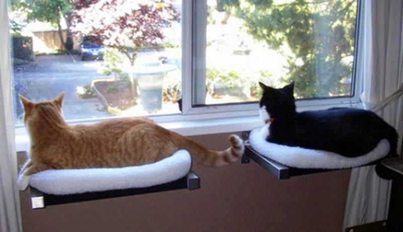 Своими руками подушки кошки