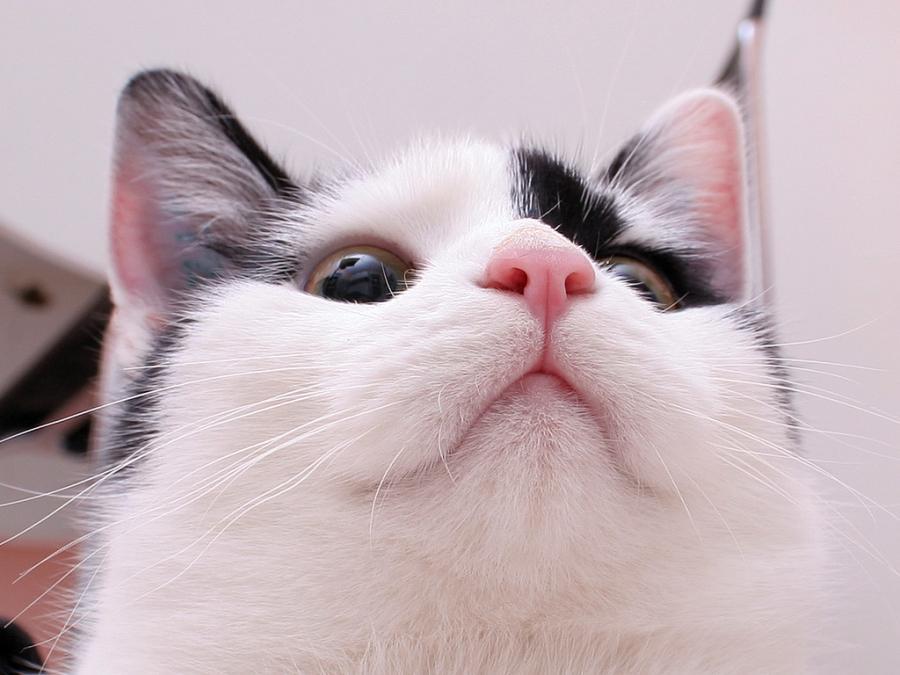 У кота теплый сухой нос