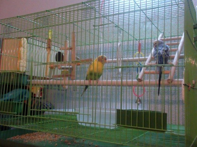 Большая клетка для птиц