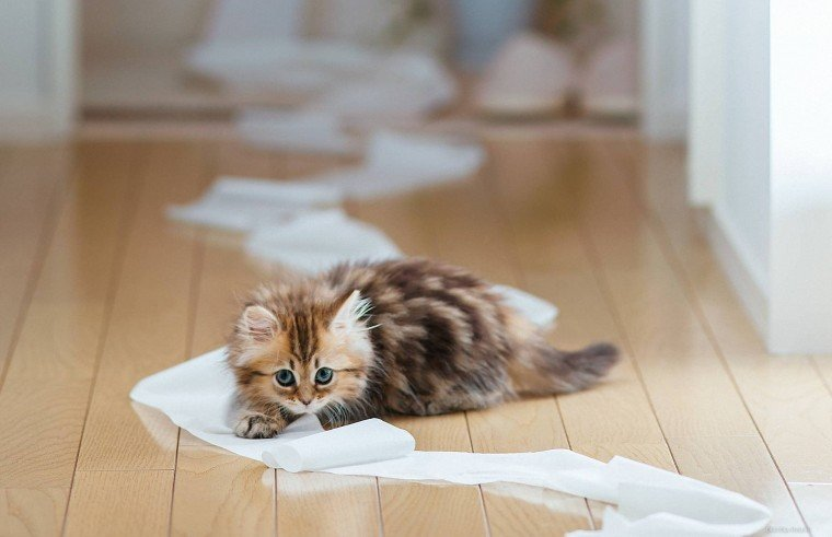 Как лечить понос у котенка в домашних условиях: способы и средства