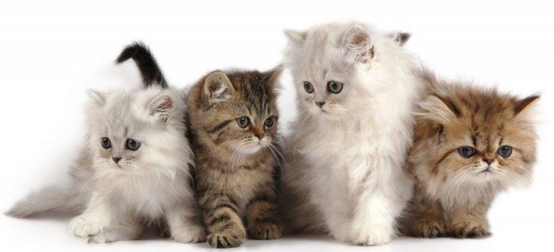 Котята с грустными глазами