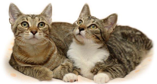 Что делать если кошка просит кота
