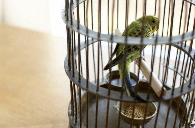 Инструкция как сделать клетку для попугая своими руками и оборудовать ее