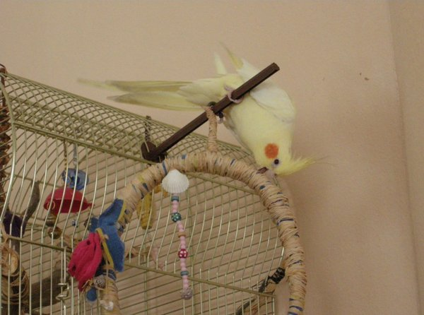 Птица балуется на жердочке
